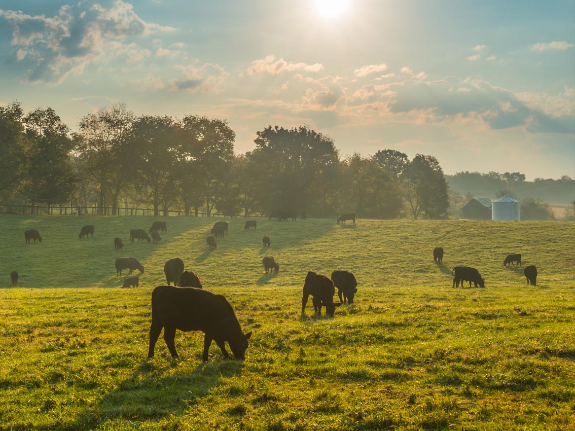 Towards climate-smart agriculture