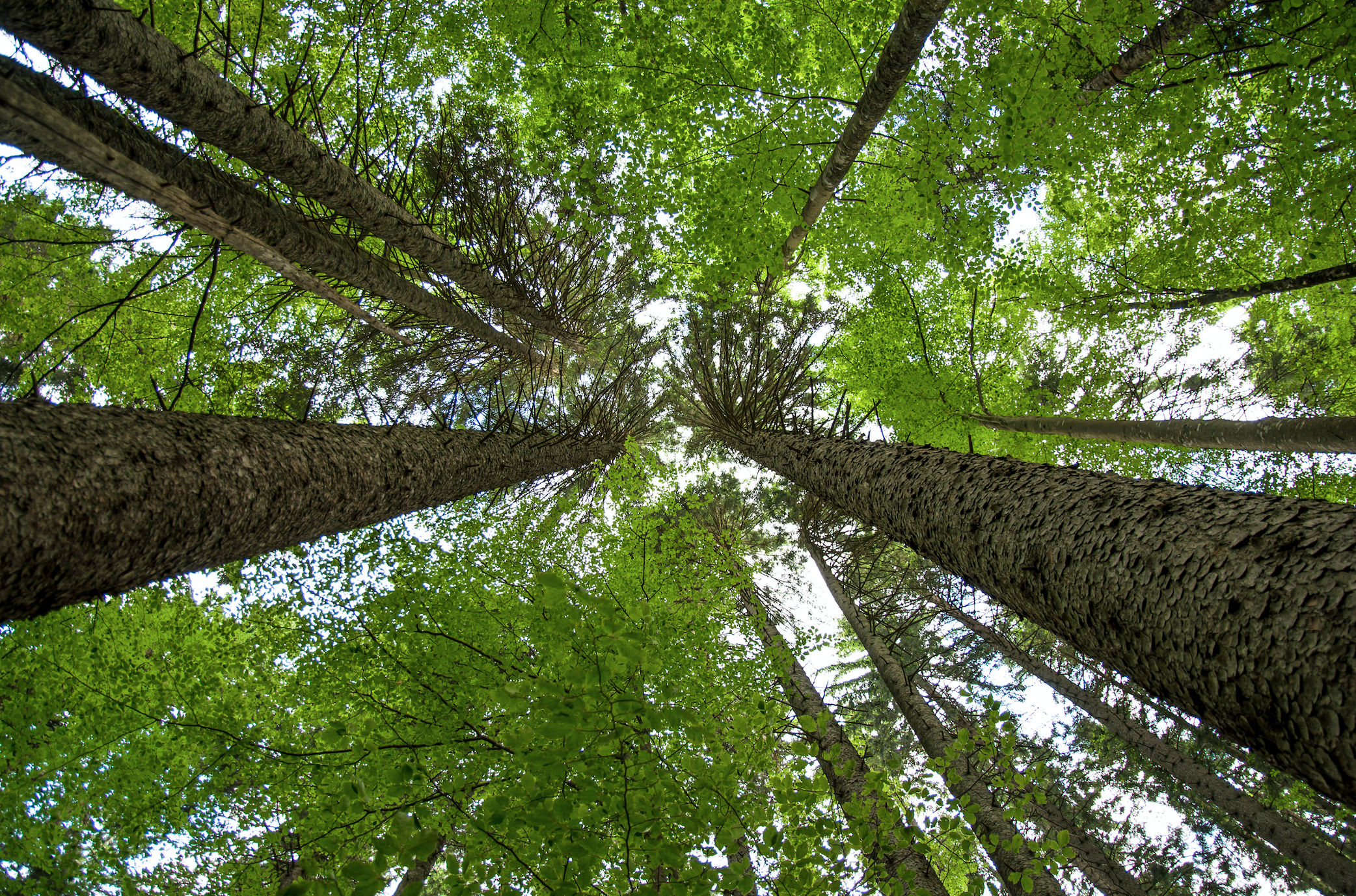 EIT Climate-KIC to launch EU forestry innovation programme