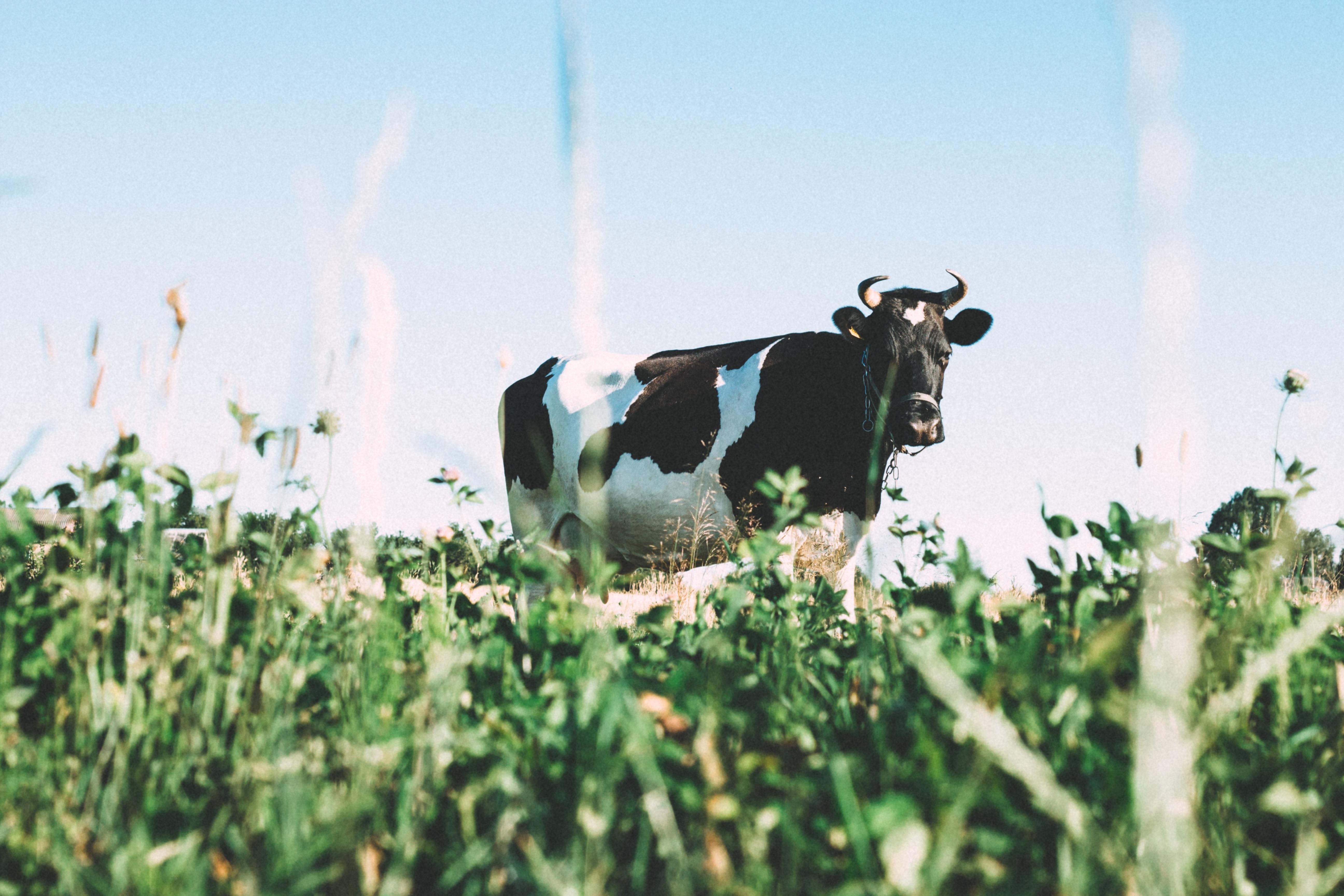 2018 Future of Farming course starts (CSA MOOC)